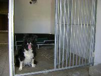 Kennels